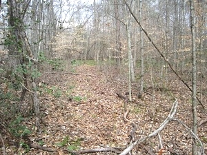SOLD!  REDUCED! 75+- ac $100,000 or Tract 1: 27 ac +- $35,500 Tract 2: 48 ac+- $64,500