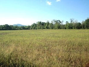 Sold! 20 ACRES + - You'll want to saddle right up when you see this 20 acre spread.  $39,500
