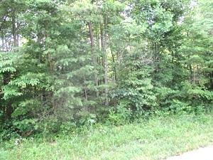 Sold! 43.52 +/- wooded acres located on Oak Ridge Church Rd.    $59,500
