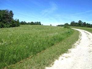 Sold!! Piney Grove, Williamsburg   Looking for a large farm or somewhere to build a subdivision?  90+/- contiguous acres $169,000