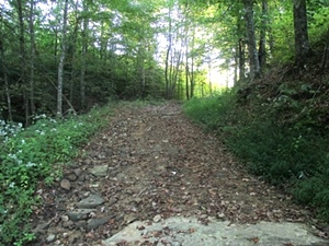 Sold! Newman Campbell Rd. off of Hwy 92  | 200 acres +/- bordering Jellico Creek & Indian Creek