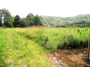 Little Wolf Creek, Williamsburg | Free Gas | 124.088 surveyed acres. Undeveloped land with fields and mountains