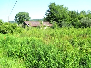 74 Arlie Leach Rd., Williamsburg | 2.04 surveyed acres at the junction of Skaggs Branch Rd. and Arlie Leach Rd.