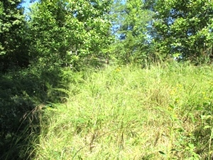 SOLD  27.436 surveyed acres on Ryan's Creek in Whitley County | Good hunting!
