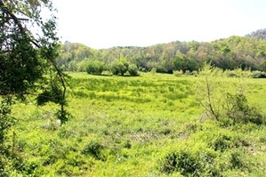Reduced! 78 Cornett Rd., Wmsbg  |  38  +/- acres located on the banks of Cane Creek near the Boston Community.