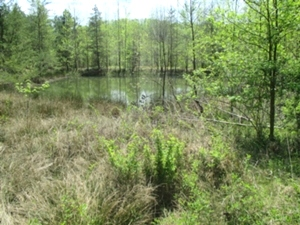 6360 Hwy 779 36.35 acres +/- located at 6360 Hwy. 779, Rockholds. This land is comprised of some gently rolling hills and some wooded areas